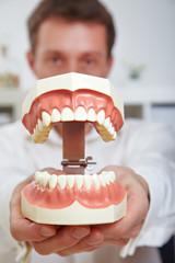 Zahnarzt zeigt Gebissmodell