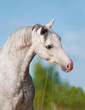 White horse portrait on the summer background