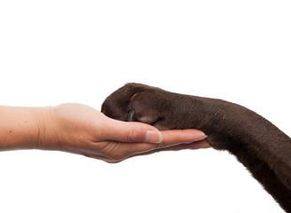Dog paw and human hand doing a handshake