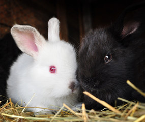 Rabbitts, baby animals