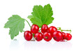 Bunch of red currants with green leaves isolated