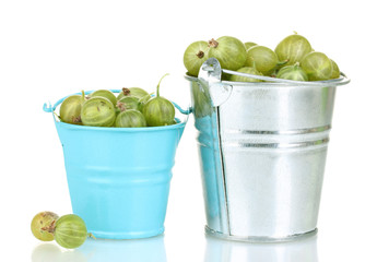 Green gooseberry in metal buckets isolated on white