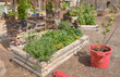 Garden beds in Ecology Center