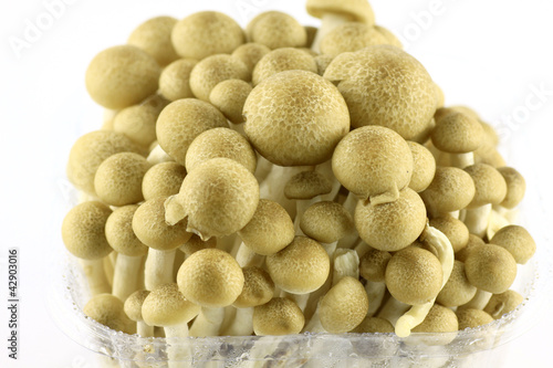 Abstract clump of Brown beech mushrooms   Buna Shimeji