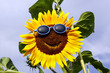 Friendly sunflower
