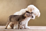 Fototapety Friends - dog and cat together