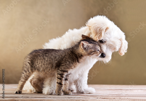 Foto op Plexiglas Kat Friends - dog and cat together