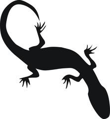 pictogramme salamandre