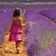 Provence - Enfant dans les champs de lavandes