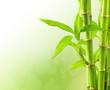 Fototapeten,asien,hintergrund,bambus,landesgrenzen