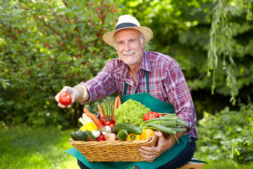 Senior gardener with vegetables is presenting a tomato