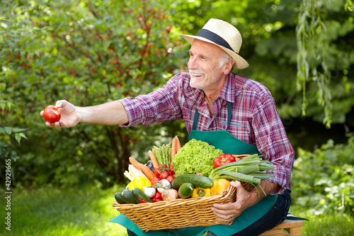 Senior gardener is presenting a basket with vegetables