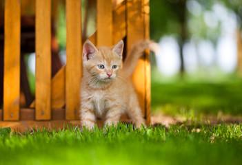 little kitten in the garden