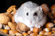 hamster and nuts