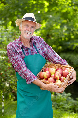 Senior gardener with a basket of apple