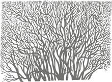 Tapety naklejki drzewa drzewo