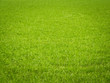 canvas print picture - Grass Background