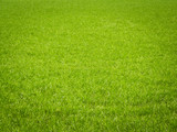 Grass Background - Fine Art prints