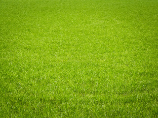 Grass Background © designelements