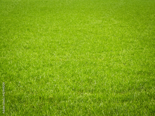 Deurstickers Weide, Moeras Grass Background