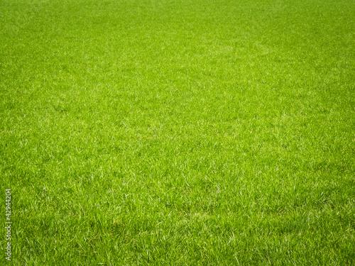 Grass Background - 42944204