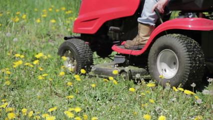 Ride-on lawnmower cutting dandelions.