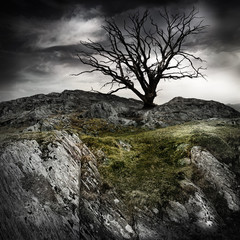 lonely old tree