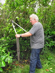 Man cutting hedge with loppers