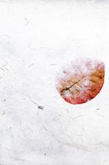 Rice paper, texture