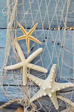 Trois starfishs sur un vieux panneau bleu rustique