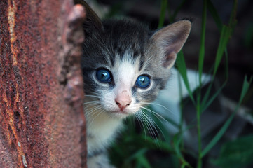 Kitten peeking from the rusty step of the rustic farmer's barn