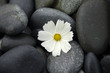 Macro of white flower on stones