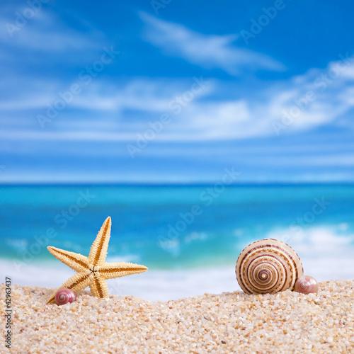 Fototapeten,bellen,strand,schön,schönheit
