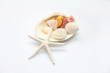 貝の集合体