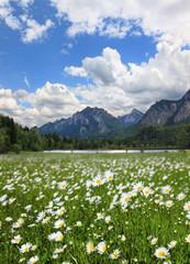 Idylle am Schwansee Allgäu Bayern
