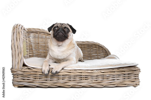 Pug on a luxury bed
