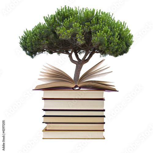 árbol y libros