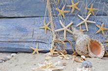 Urlaubserinnerung: Posthornschnecke, Seesterne und Fischernetz