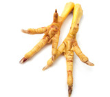 Chicken feet on white background