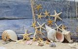 Urlaubserinnerung: Nautilus, Posthornschnecke und Seesterne