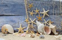 Location Rappel: Nautilus escargot corne et étoiles de mer