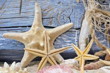 Étoiles de mer et bois flotté contre le mur en bois bleu