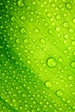 Fototapety Green leaf with drops of water