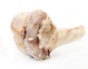 bone on a white background
