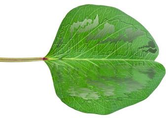 concept pollution environnement