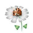 Funny ladybird on the daisy