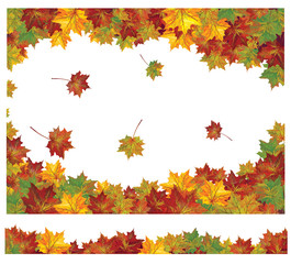 Vector of autumn colorful leaves.