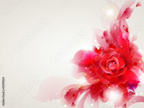 Abstract soft background with red rose