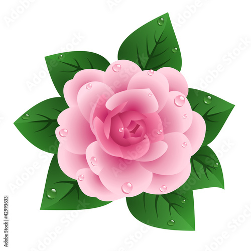 Vector illustration of pink camellia