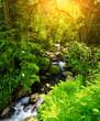 stream - 42995627